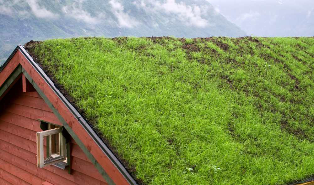 green roof photosynthesis