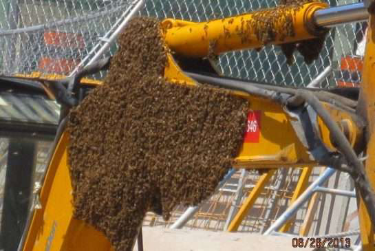 Bees swarm a backhoe on a construction site at Toronto's Union Station // Credit: Toronto Star/City of Toronto
