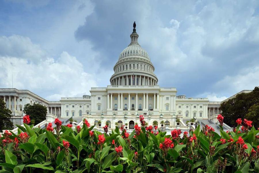 Capitol_flowers