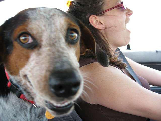 Singing in car