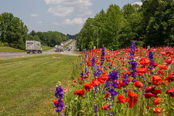 Ncdot S Western Division Wins Wildflower Award For Display Along I 85