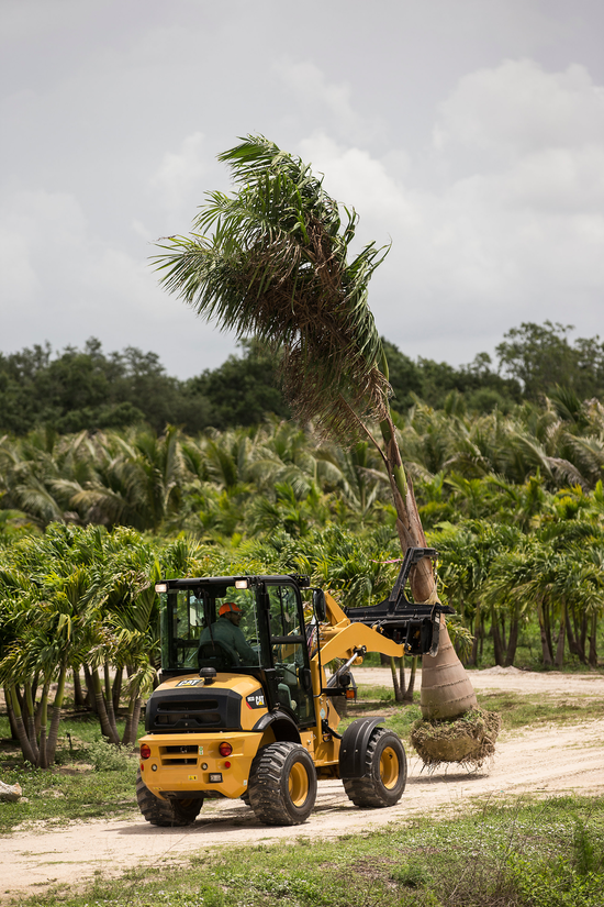 Cat compact wheel loader with material handling arm movie a palm tree